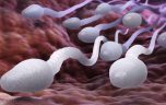 Tinh trùng và những sự thật đáng kinh ngạc
