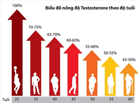 bieu-do-testosterone-theo-tuoi